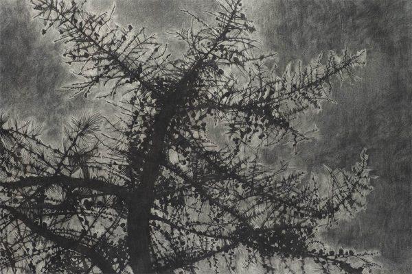 Pine branches Giclee Print - Fine Art Print by Leigh D Walker Artist