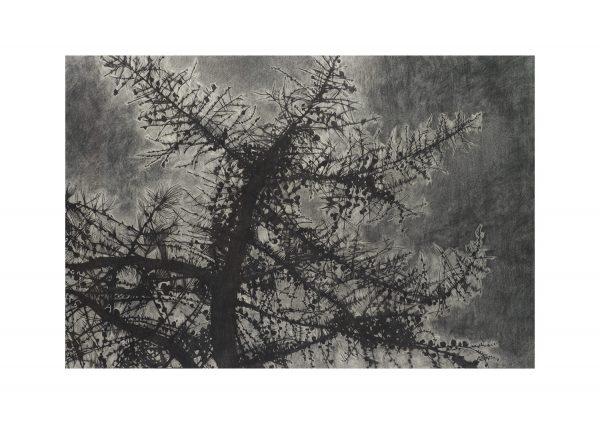 Pine branches - Fine art Leigh D Walker Artist